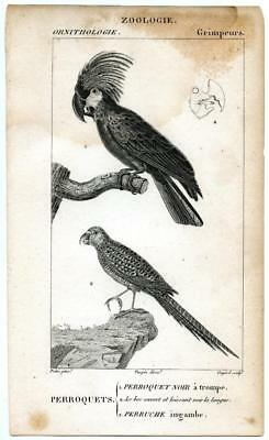 1816 Turpin Parakeets Perroquets Copper Engraving Antique Bird Zoology Print
