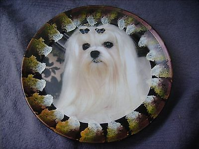 Maltese     On A Decoupage  Plate