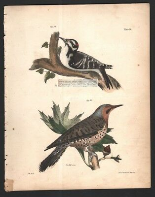 Woodpeckers - Golden Winged and Hairy Original 1845 DeKay H/C   Bird Print