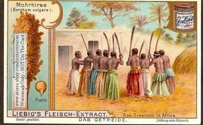 Native African Thrashing Dreschen Sorghum Grain Flour c1903 Trade Ad Card g