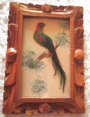 Circa '60's Actual Feathered Bird in Carved Wooden Frame