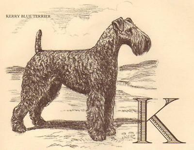 Kerry Blue Terrier - Vintage Dog Print - 1954 Megargee