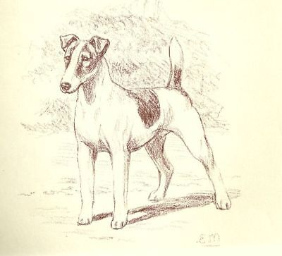 Smooth Fox Terrier - Vintage Dog Print - 1954 Megargee