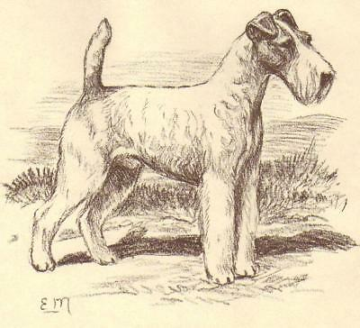 Wire Fox Terrier - Vintage Dog Print - 1954 Megargee