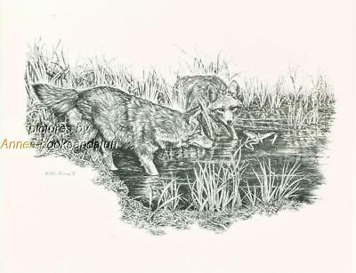 #173 COYOTES  wild life art print  * Pen and ink drawing by Jan Jellins