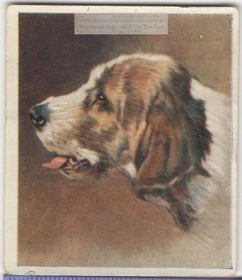 Otterhound Dog Pet Animal Canine c80 Y/O Trade Ad Card