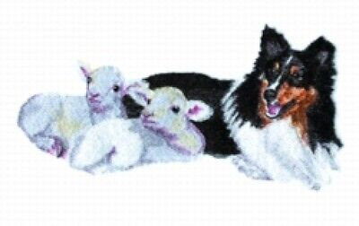 Embroidered Short-Sleeved T-Shirt - Shetland Sheepdog with Lambs BT4439