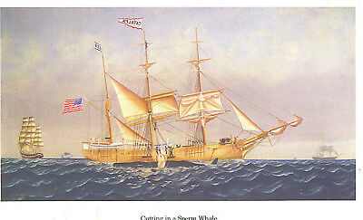 Vintage Colorful Print * Cutting In A Sperm Whale * Catalpa Ship Harpoon Boat