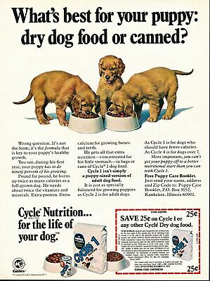 Print Ad~1979~Cycle 1 Puppy Food~Golden Retriever Puppies~F400