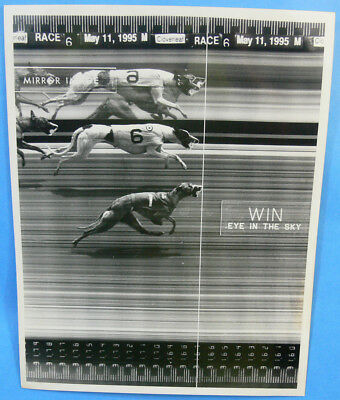1995 Cloverleaf Race Track Whippet Dog Racing Finishline Picture Photo Win
