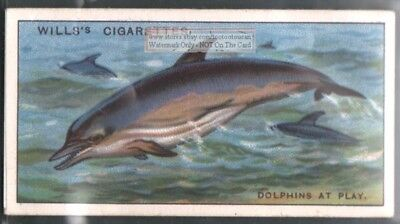 Dolphin At Play c90 Y/O Trade Ad Card
