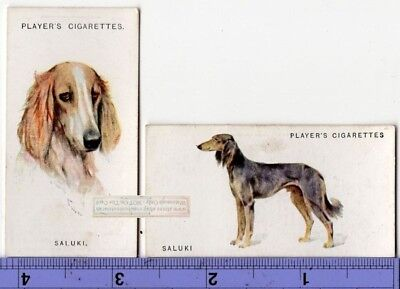 Saluki Dogs 2 Different Vintage Ad Trade Cards 2nd