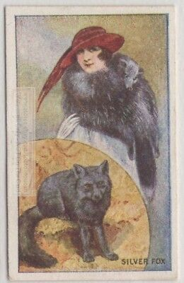 1920s Silver Fox Pelt Trapping Fashion Hunting 90+ Y/O Trade  Ad Card