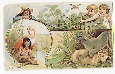 Arbuckle Coffee 1893 Trade Card Sports & Pastimes #28 Patagonia Wild Animal Chil