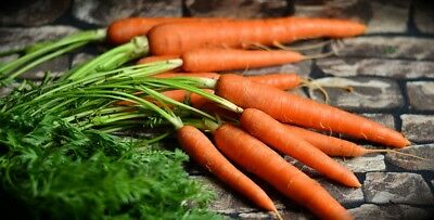 CARROT 'All Seasons' 150+ vegetable garden Boondie Seeds cool climate HEIRLOOM