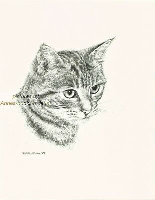 #113 TABBY CAT  * cat art print * pen & ink drawing by Jan Jellins