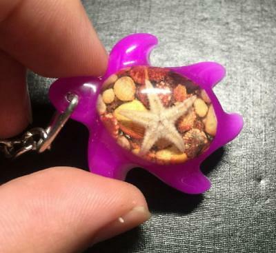 cool men's insect starfish  tortoise style  key-chains  jewelry bzh001