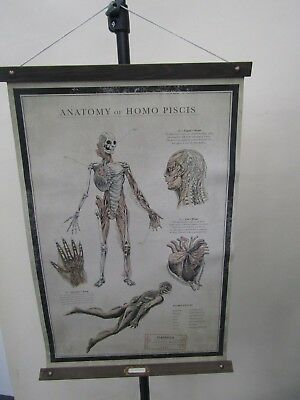 Shape of Water Promotional Scroll Anatomy of Homo Piscis by Guillermo del Toro