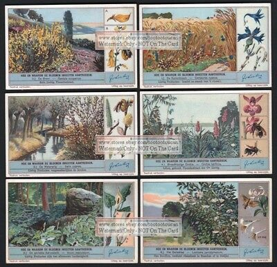 Plant Insect Attraction 6 NICE 75 Y/O Trade Ad Cards