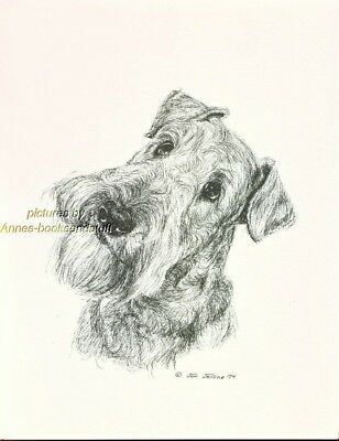 #26 AIREDALE TERRIER portrait  dog art print * Pen and ink drawing * Jan Jellins