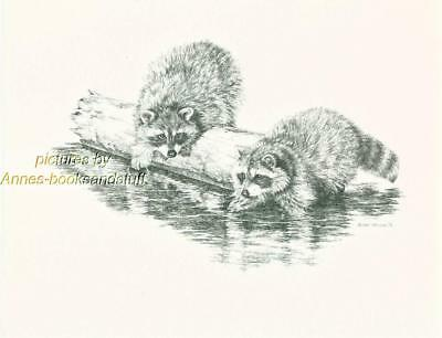 #131 two RACCOONS playing wild life art print  * Pen & ink drawing * Jan Jellins