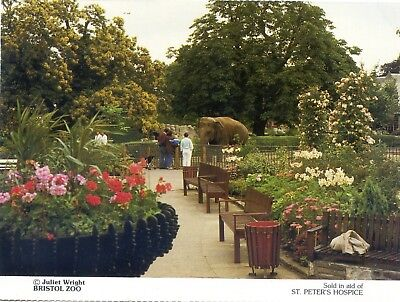 Bristol Zoo - Elephant - Postcard View