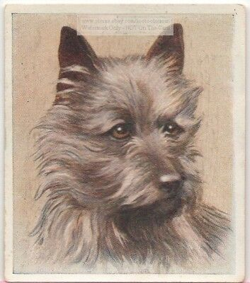Cairn Terrier Dog Pet Animal Canine c80 Y/O Trade Ad Card