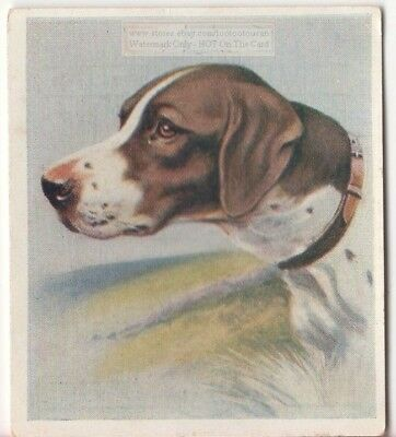 Pointer Dog Pet Animal Canine c80 Y/O Trade Ad Card
