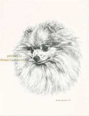 #220 POMERANIAN portrait dog art print * Pen and ink drawing by Jan Jellins