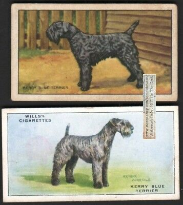 Kerry Blue Terrier Dogs 2 Different 75+ Y/O Ad Trade Cards