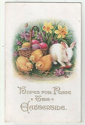 wa animals animal postcard rabbit