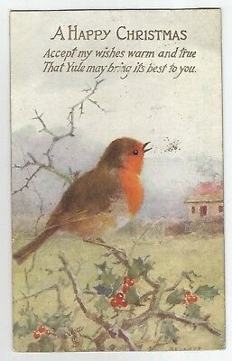 wa animals birds postcard bird animal robin