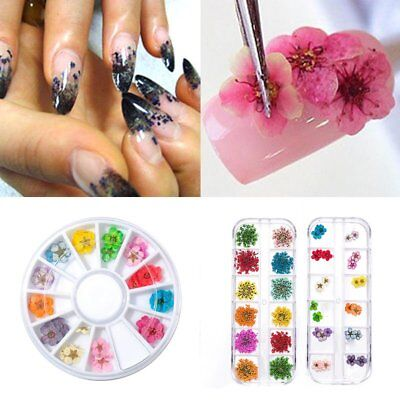 Art Decoration Design DIY Tips Manicure Real Dried Dry Flower 3D Nail 12 Colors