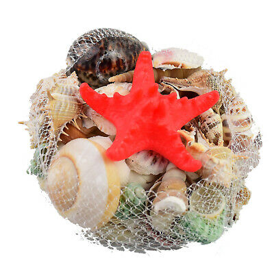 0.5kg Sea Shell Seashells Beach Starfish Small Large Wedding Table Decoration