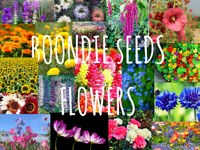 FLOWER SEEDS spring pansy poppy hollyhock daisy sunflower and more BOONDIE SEEDs