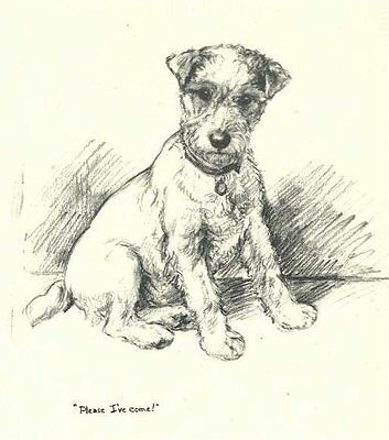 Wire Fox Terrier 2 - Vintage Dog Print - 1948 KF Barker