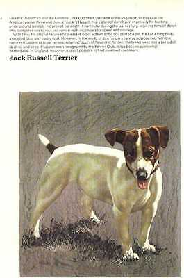 Jack Russell Terrier Dog Print - 1976 Cozzaglio