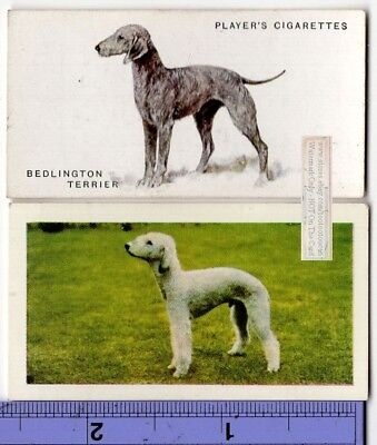 Bedlington Terrier  Dogs 2 Different Vintage Ad Trade Cards 2nd