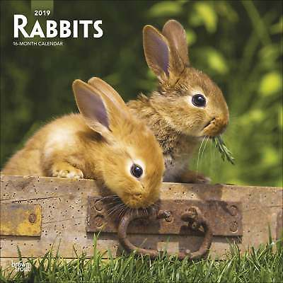 Rabbits Calendar 2019 Animals Month To View