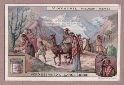 Llama South American Auracanian Indian Nomads 1910 Trade Ad  Card