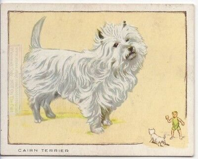Cairn Terrier Dog Canine Pet 80+ Y/O Ad Trade Card