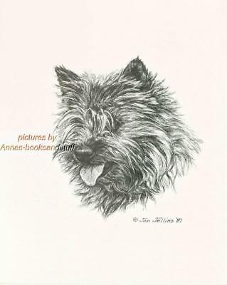 #294 CAIRN TERRIER portrait  dog art print * Pen and ink drawing * Jan Jellins