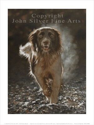 SPRINGER SPANIEL PORTRAIT SIGNED & NUMBERED LTD EDITION PRINT by JOHN SILVER. BA