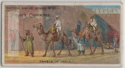 Camel  India Two Humped Bactrain00+ Y/O Trade Card