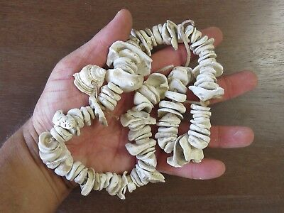 22 inch strand Mississippian Shell Bead Necklace, eastern TN., x Beutell