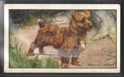 Norwich Terrier Dog 75+ Y/O Ad Trade Card