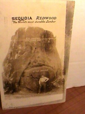 ad card w/real photo: Sequoia Redwood, world's most durable lumber 1920s