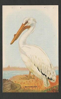 Vintage Sally Ann Bread Advertising~Recipe Card~WHITE PELICAN~ FREE USA  S. & H.