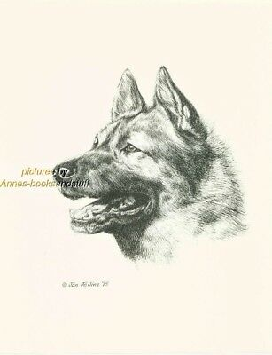 #103 NORWEGIAN ELKHOUND * dog art print * Pen & ink drawing * Jan Jellins