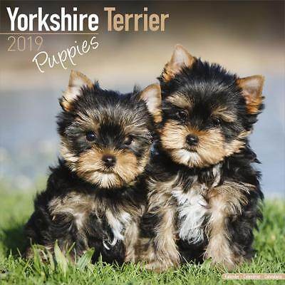 Yorkshire Terrier Chiots 2019 Chiot Calendrier Réduction de 15% Multi Commandes